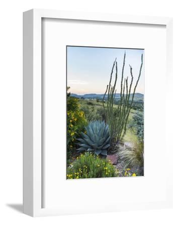 Jeff Davis County, Texas. Davis Mountains and Desert Vegetation-Larry Ditto-Framed Photographic Print