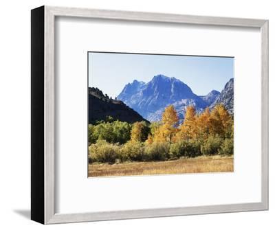 California, Sierra Nevada, Inyo Nf, Fall Colors of Aspen Trees-Christopher Talbot Frank-Framed Photographic Print
