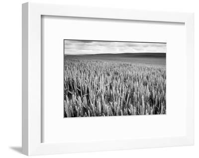 Palouse Wheat Field, Washington-James White-Framed Photographic Print