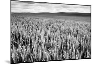 Palouse Wheat Field, Washington-James White-Mounted Photographic Print