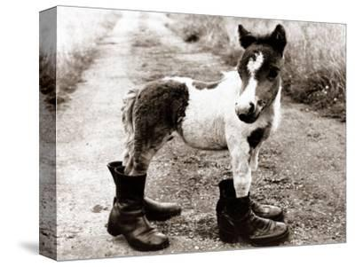 Adult Horse with Giant Boots--Stretched Canvas Print