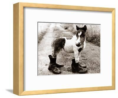 Adult Horse with Giant Boots--Framed Photographic Print