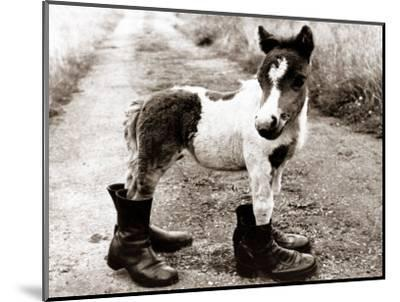 Adult Horse with Giant Boots--Mounted Photographic Print