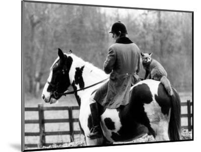 A Pet Fox Sits on the Horse of Its Owner--Mounted Photographic Print