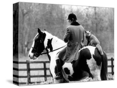 A Pet Fox Sits on the Horse of Its Owner--Stretched Canvas Print