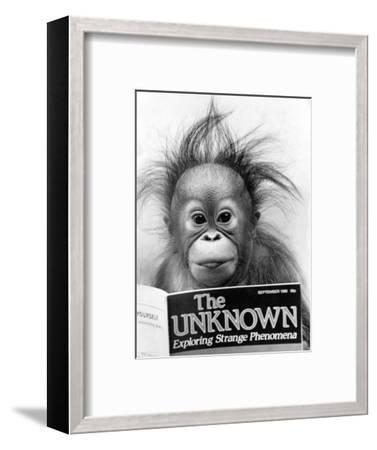 Orangutang, October 1986--Framed Photographic Print