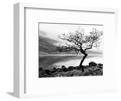 Solitary Tree on the Shore of Loch Etive, Highlands, Scotland, UK-Nadia Isakova-Framed Premium Photographic Print