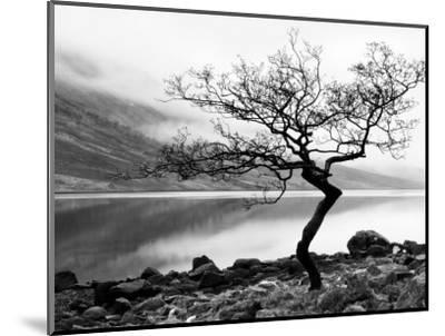 Solitary Tree on the Shore of Loch Etive, Highlands, Scotland, UK-Nadia Isakova-Mounted Premium Photographic Print