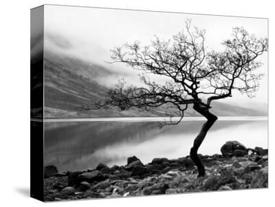 Solitary Tree on the Shore of Loch Etive, Highlands, Scotland, UK-Nadia Isakova-Stretched Canvas Print