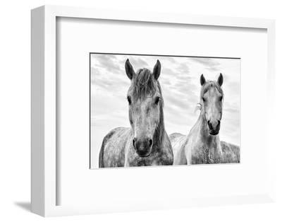 White Horses, Camargue, France-Nadia Isakova-Framed Premium Photographic Print