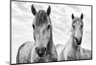 White Horses, Camargue, France-Nadia Isakova-Mounted Premium Photographic Print