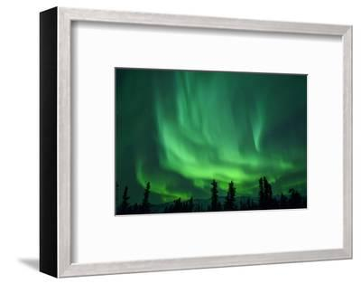 Aurora Borealis at Chena Hot Springs, Fairbanks, Alaska, Usa-Christian Heeb-Framed Photographic Print