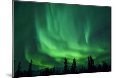 Aurora Borealis at Chena Hot Springs, Fairbanks, Alaska, Usa-Christian Heeb-Mounted Photographic Print