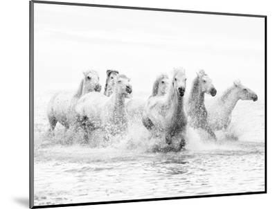 White Horses of Camargue Running Through the Water, Camargue, France-Nadia Isakova-Mounted Premium Photographic Print
