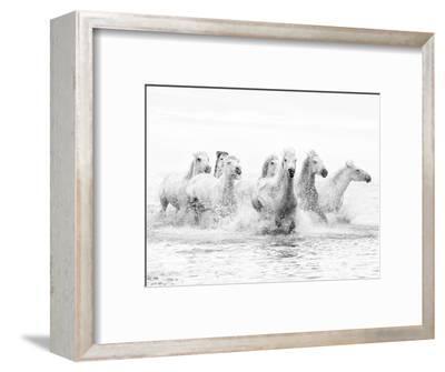 White Horses of Camargue Running Through the Water, Camargue, France-Nadia Isakova-Framed Premium Photographic Print