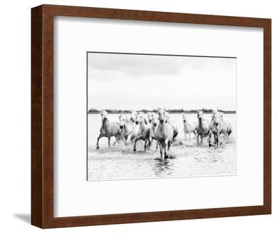 Camargue White Horses Galloping Through Water, Camargue, France-Nadia Isakova-Framed Photographic Print
