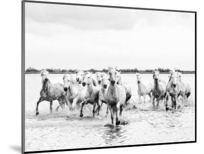 Camargue White Horses Galloping Through Water, Camargue, France-Nadia Isakova-Mounted Photographic Print