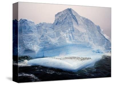 Scotia Sea, Chinstrap Penguins on Iceberg, Antarctica-Allan White-Stretched Canvas Print