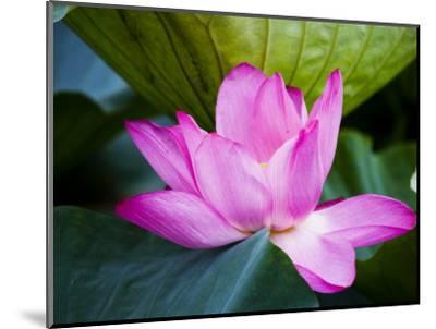 Lotus Flower Detail, West Lake-Greg Elms-Mounted Photographic Print