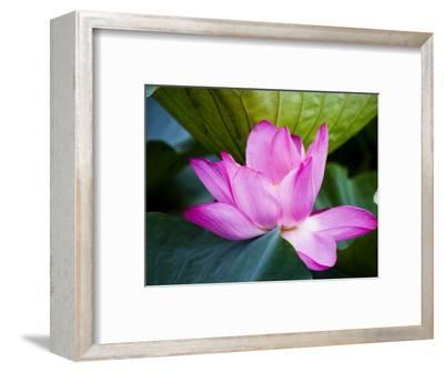 Lotus Flower Detail, West Lake-Greg Elms-Framed Photographic Print