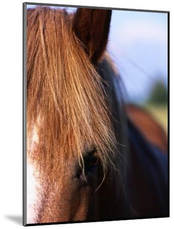 Portrait of Horse, Near Kragelund, Denmark-Holger Leue-Mounted Photographic Print