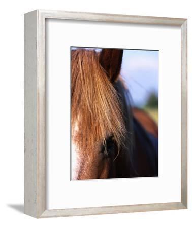 Portrait of Horse, Near Kragelund, Denmark-Holger Leue-Framed Photographic Print