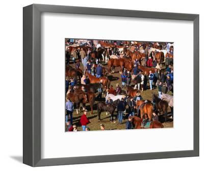 The Masses Gather for the Ballinasloe Horse Fair, Ballinasloe, Ireland-Doug McKinlay-Framed Photographic Print