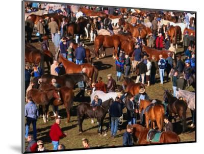 The Masses Gather for the Ballinasloe Horse Fair, Ballinasloe, Ireland-Doug McKinlay-Mounted Photographic Print