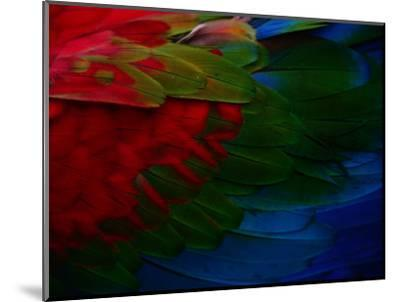 Macaw Plumage Detail-Diego Lezama-Mounted Photographic Print