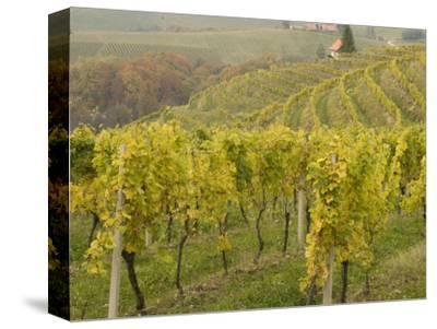 Vineyard-Richard Nebesky-Stretched Canvas Print