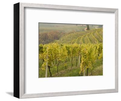 Vineyard-Richard Nebesky-Framed Photographic Print