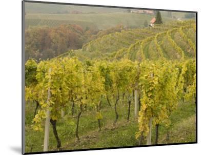 Vineyard-Richard Nebesky-Mounted Photographic Print