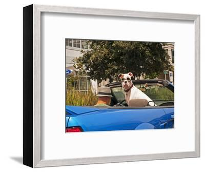 Dog Wearing Goggles, Passenger of Convertible Car on Vanness Avenue-Sabrina Dalbesio-Framed Photographic Print