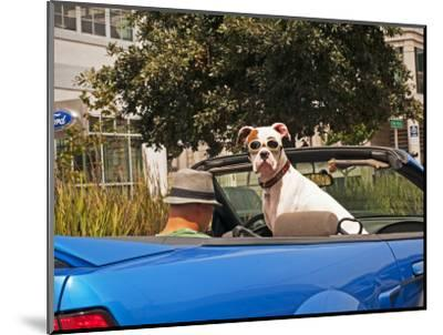Dog Wearing Goggles, Passenger of Convertible Car on Vanness Avenue-Sabrina Dalbesio-Mounted Photographic Print
