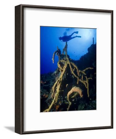 Diver Silhouette over Reef with Large Stand of Scattered Pore Rope Sponge-Michael Lawrence-Framed Photographic Print