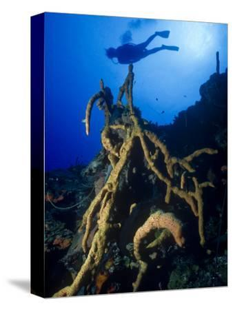 Diver Silhouette over Reef with Large Stand of Scattered Pore Rope Sponge-Michael Lawrence-Stretched Canvas Print