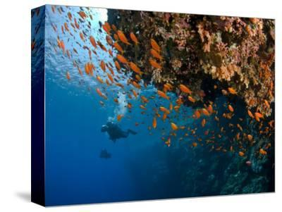 Wreck of Numidia, Big Brother Island-Mark Webster-Stretched Canvas Print