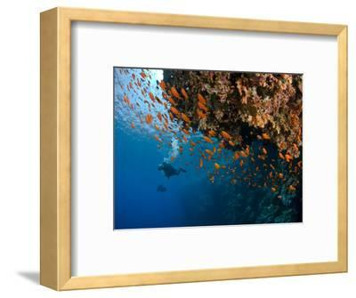 Wreck of Numidia, Big Brother Island-Mark Webster-Framed Photographic Print