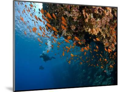 Wreck of Numidia, Big Brother Island-Mark Webster-Mounted Photographic Print