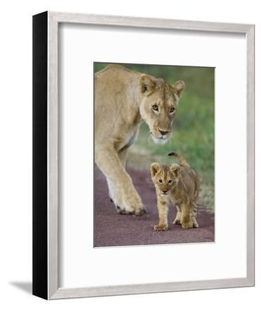 Close-up of a Lioness and Her Cub, Ngorongoro Crater, Ngorongoro Conservation Area--Framed Photographic Print