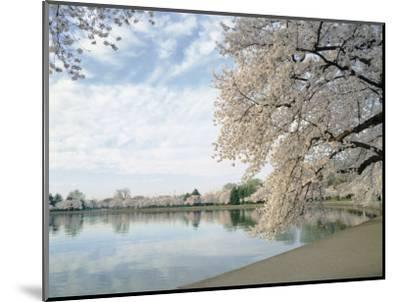Cherry Blossom Trees around the Tidal Basin, Washington DC, USA--Mounted Photographic Print