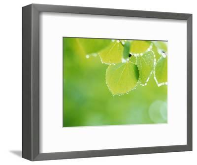 Selective Focus Close Up of Green Leaves Hanging from Tree--Framed Photographic Print