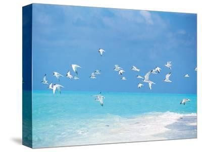 Flock of Birds Migrating Over Seascape--Stretched Canvas Print