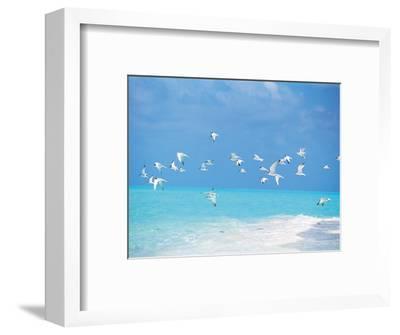 Flock of Birds Migrating Over Seascape--Framed Photographic Print
