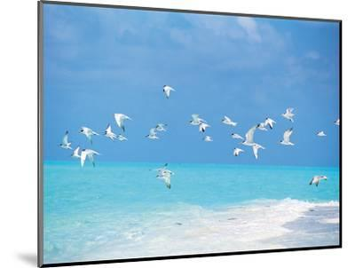 Flock of Birds Migrating Over Seascape--Mounted Photographic Print