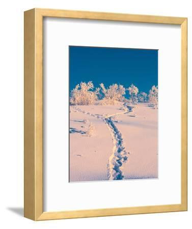 Cold Winter in Lapland Sweden with Temperatures -47 Celsius--Framed Photographic Print