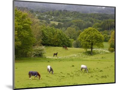Horses in Field Near Vejle, Jutland, Denmark, Scandinavia, Europe-Yadid Levy-Mounted Photographic Print
