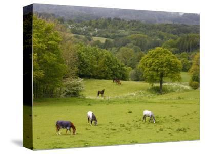 Horses in Field Near Vejle, Jutland, Denmark, Scandinavia, Europe-Yadid Levy-Stretched Canvas Print