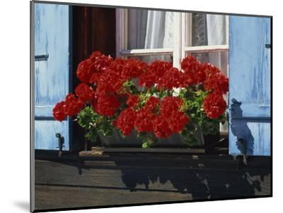 Red Geraniums and Blue Shutters, Bort, Grindelwald, Bern, Switzerland, Europe-Tomlinson Ruth-Mounted Photographic Print