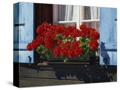 Red Geraniums and Blue Shutters, Bort, Grindelwald, Bern, Switzerland, Europe-Tomlinson Ruth-Stretched Canvas Print